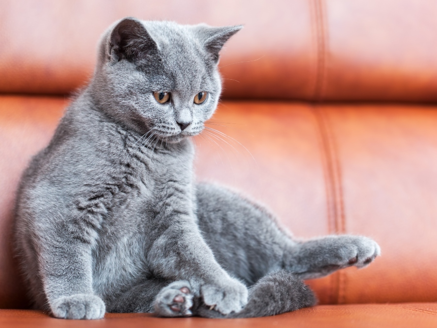 How to Avoid & Repair Cat Scratches on Your Leather Sofa