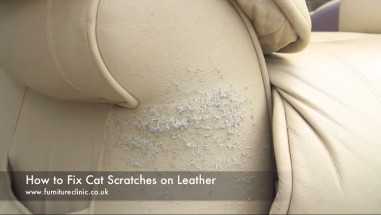 how to repair cat scratches on leather - furniture clinic