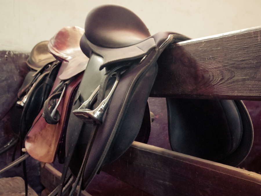 Top Tips For Caring For Your Horse Tack